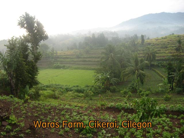 waras farm, cilegon