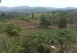 Lokasi Aloevera di Cilegon-2