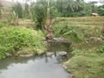 Sungai di tengah Waras Farm Cilegon