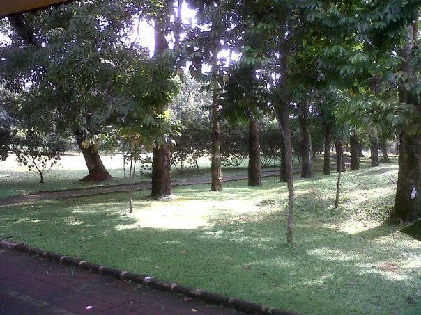 Hutan UI