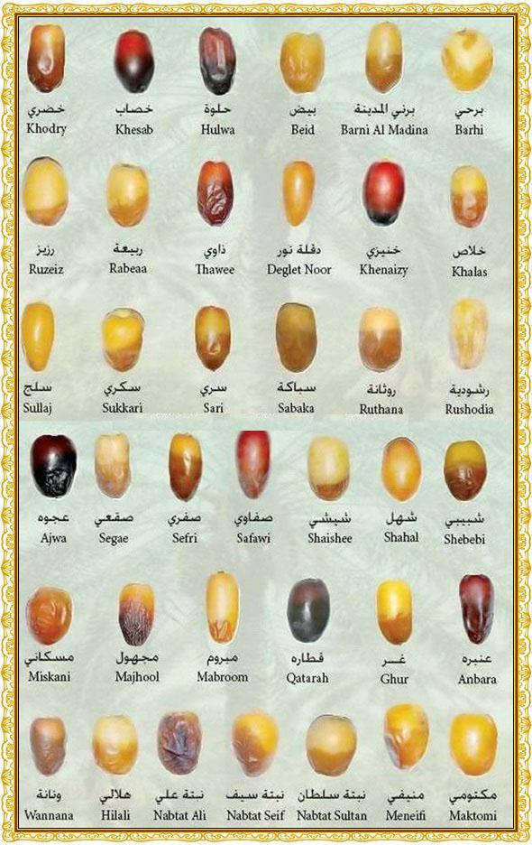 jenis-jenis-buah-kurma
