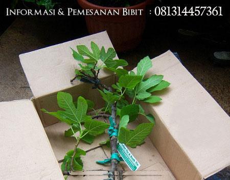packing-pohon-tin-siap-kirim1