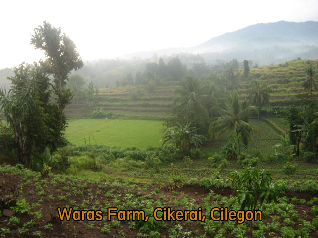 waras farm, cilegon