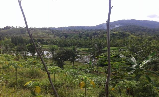 pemandangan waras farm