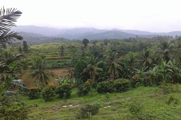 view waras farm