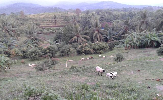 Hijaunya Waras Farm