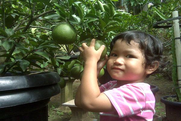 Jeruk Bali Mini