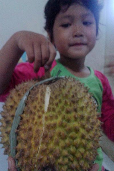 Durian Runtuh