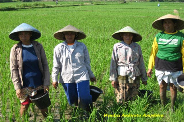 Wanita-wanita-pertanian-indonesia