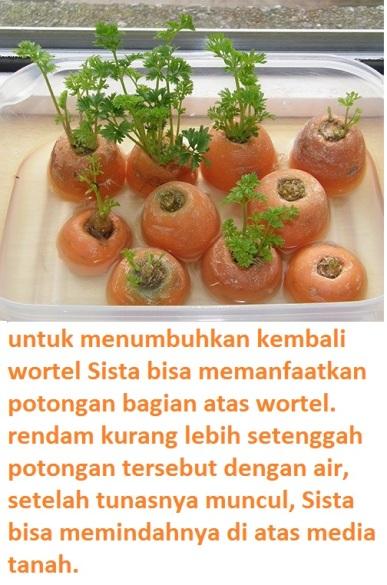 wortel dari wortel-2