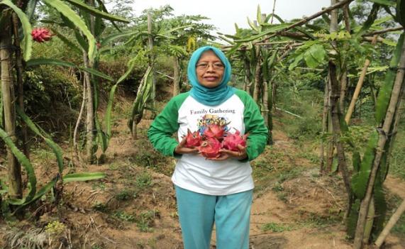 Kebun Buah Naga Waras Farm