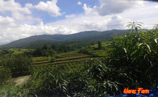 view-waras-farm