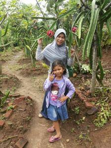 agrowisata kebun buah naga