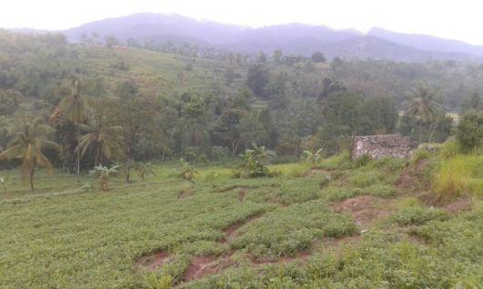 waras farm view