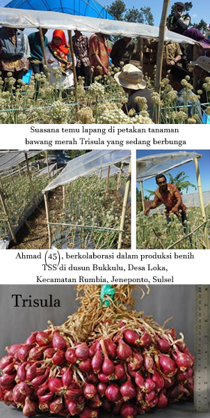 trisula