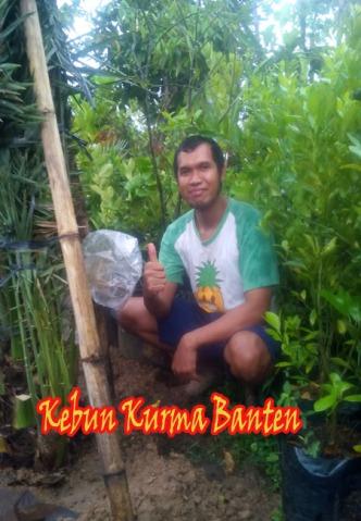 kurma-banten-1